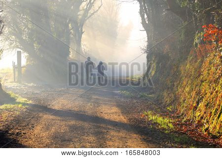 Couple is walking through a foggy forest in the morning sun