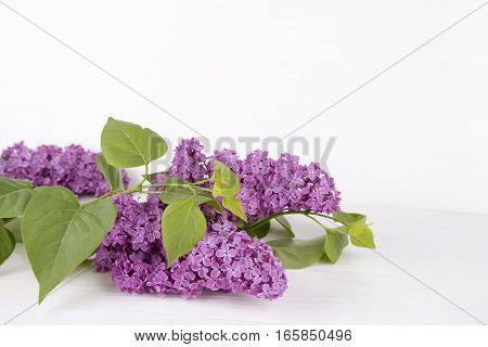 Bouquet of beautiful lilac on white background.
