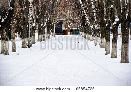 the park alley tree way in winter