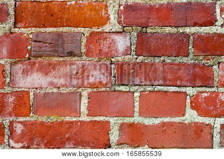 Closeup On Brick Wall