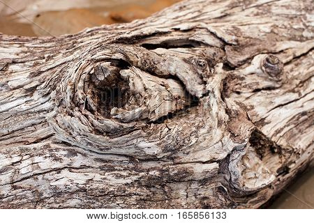 Tree Timber Texture