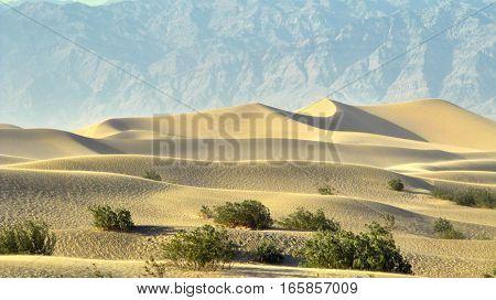Death Valley sand dunes - mesquite Desert