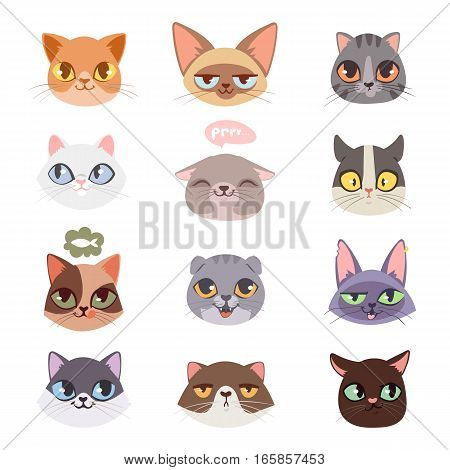 Cats heads vector illustration. Cute animal funny decorative characters. Color abstract feline domestic trendy pet drawn. Happy mammal fur adorable breed.