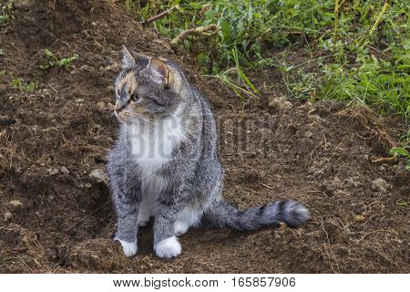 Gray and white striped little cat sitting on the ground