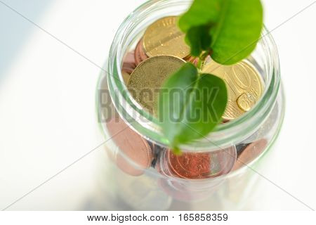 Little green plant sprouting from a jar full of coins