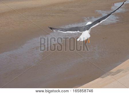Seagull flying over Blackpool Pleasure Beach on the Fylde coast in Blackpool Lancashire UK poster