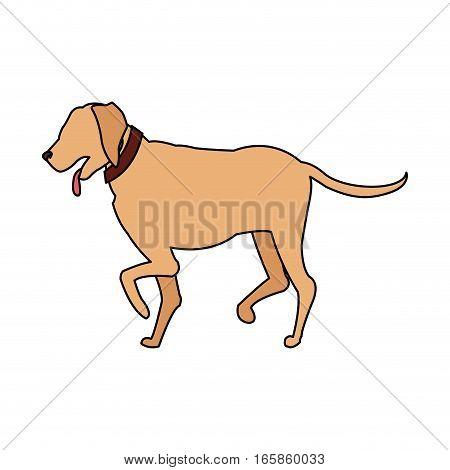 dog cartoon icon over white background. colorful design. vector illustration