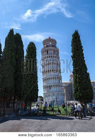 Leaning tower of Pisa in Italy viewed through the cypress trees.