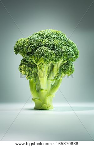 Healthy food green Cauliflower broccoli in the form of a tree;
