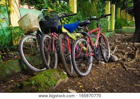 Bicycles parked under the tree photo taken in Depok Indonesia java