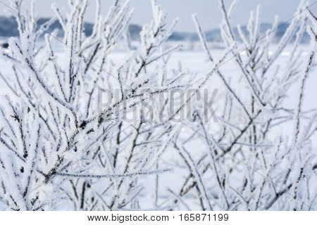 Rime ice on a tree branches in front of snow field