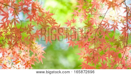 Abstract background of Autumn leaves shallow depth of focus.