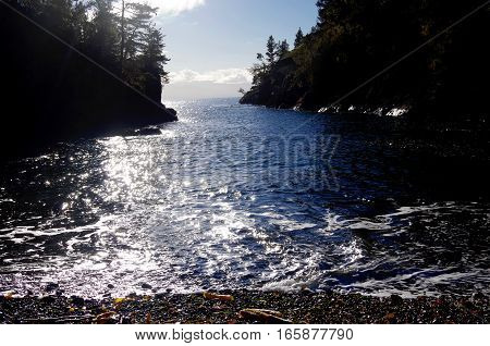 Bright winter sun sparkles off of the sea in a small bay in East Sooke Park Vancouver Island BC. The rocky shoreline is covered in evergreens and the beach in the foreground is littered with broken kelp.