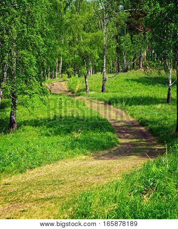 Footpath In The Green Summer Forest