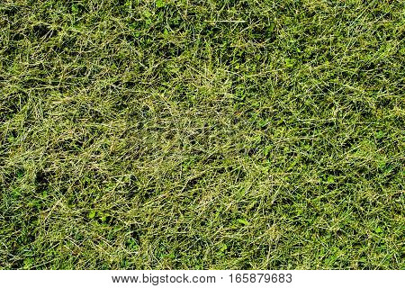 Freshly cut green grass texture on sunny day