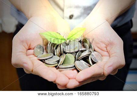 The coin has a tree growing out of hand. Plant Growing Savings Coins. Investment or education Concept.