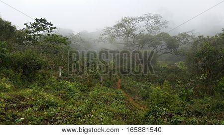 A Stormy Mexican jungle in Vera Cruz
