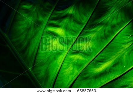 Closeup green leaf background texture with light