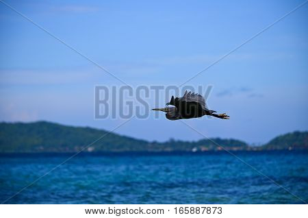 A bird flying over the sea in Thailand
