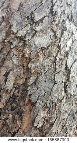 Tree bark / wood texture. Tree bark background