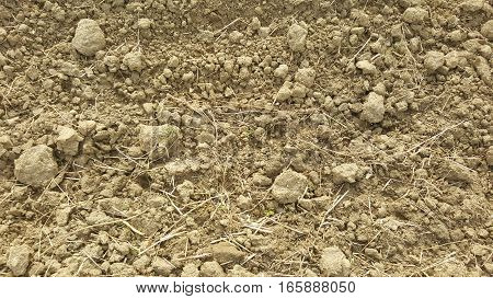 Soil / sand texture background. Soil abstract texture
