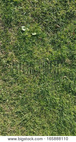 Green grass abstract texture. Grass background texture