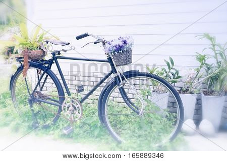 vintage bicycle used for a garden decoration as a place for flowerpots