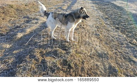Cute young dog looking far. Dog in nature