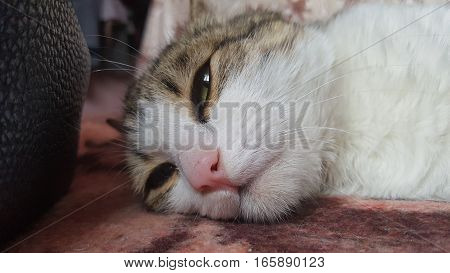 Beautiful cat lying on bed. Cat sitting on bed