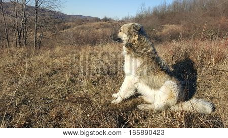 Cute young dog sitting and looking far