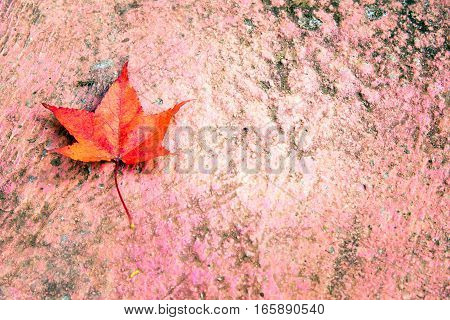 Maple Leaf With Autumn Colors. The Leaf Is Placed On The Corner Of A Concrete Step