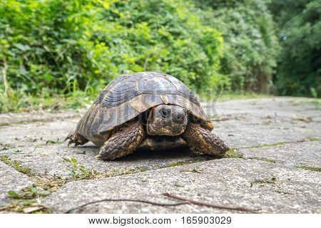 Wild turtle outdoors in Dion Park. Macedonia Greece