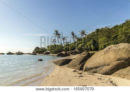 Coastline with stones and palm trees on Koh Phangan, Thailand