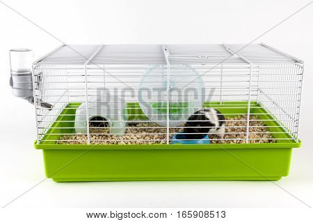 Hamster eating in green cage on white