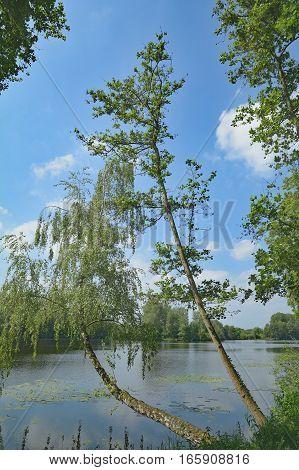 at Lake Borner See in Rhineland in Schwalm-Nette Naturepark near Brueggen,Lower Rhine region,Germany