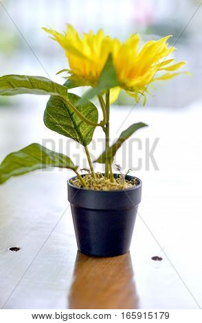 Yellow Flowers In Black Flowerpot On A Table