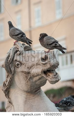 Close detail of sculptured detail from a typical fountain in Rome Italy with pigeons unimpressed by the expression on their perch.