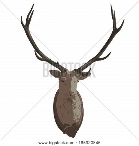 Mounted head of deer. Stuffed stag with monumental antlers. Hunting antique trophy. Taxidermy of deer´s head hung on white wall. Flatten illustration master vector.