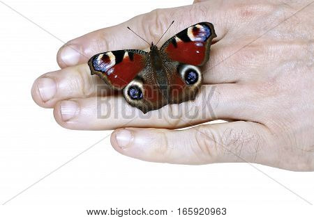 Peacock eye Butterfly on a hand isolated on white background