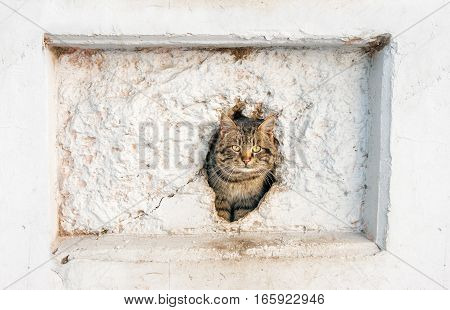 cat peeking out of a hole in the wall outdoor closeup