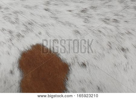 Fabric Textile Close Up of Brown and White Cowhide or Fragment of Skin A Cow Texture Background.