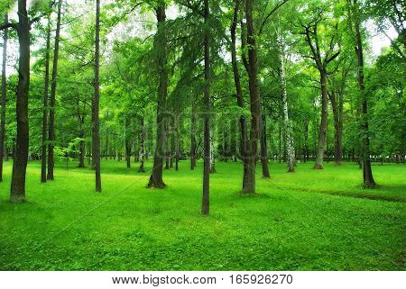 Green park, spring forest, nature background, sunny lawn