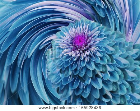 turquoise-blue flowers chrysanthemum. blue-turquoise background. floral collage. flower composition. For design.