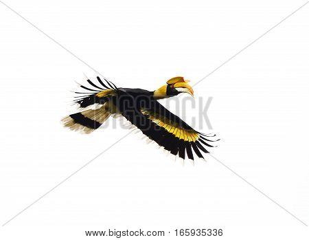 Hornbill Isolated On White Background