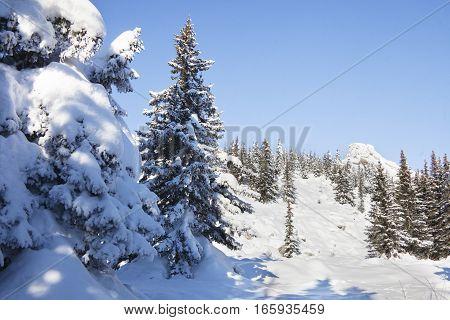 Winter Landscape. Snow Covered Forest. Mountain Range Zyuratkul