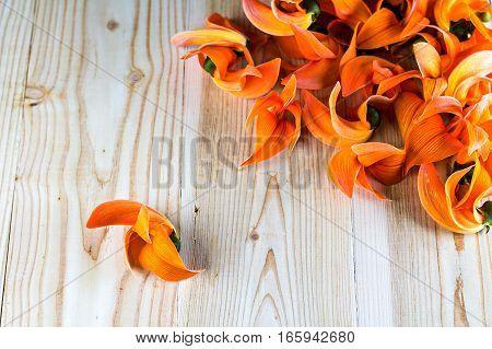 Pile of Bastard Teak or Bengal Kino's flowers on wood