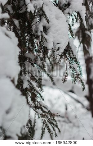 russian winter frozen forest and trees ander snow