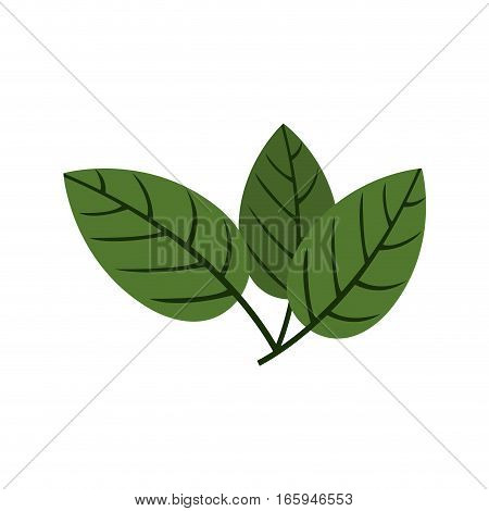 silhouette green leaves with ramifications vector illustration