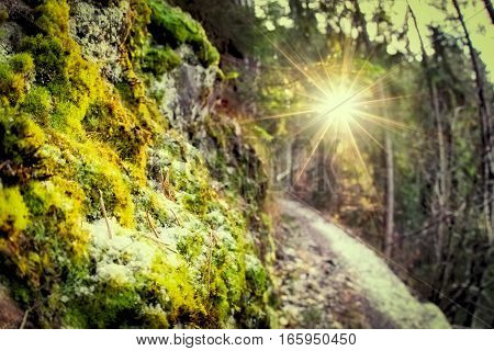 Sun rays in deep forest at Slovakia