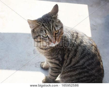 A young gray cat sitting on the rural house threshold outdoors